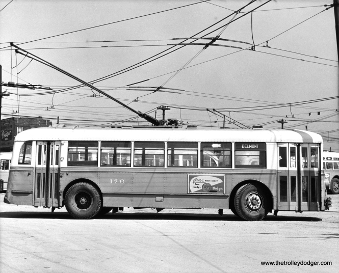 CTA trolley bus 176, signed for route 77 - Belmont.
